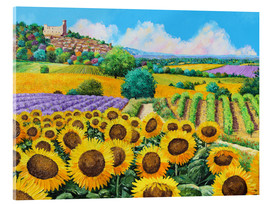 Akrylbillede  Vineyards and sunflowers in Provence - Jean-Marc Janiaczyk