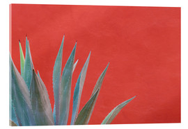 Akrylbillede  Agave in front of red wall - Don Paulson