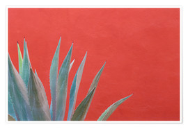 Premium-plakat  Agave in front of red wall - Don Paulson