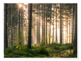 Premium-plakat Sunlight in fall forest