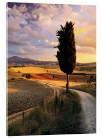 Akrylbillede  Evening in the Val d'Orcia, Tuscany - Matteo Colombo