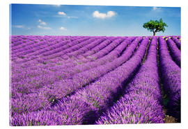 Akrylbillede  Lavender field and tree - Matteo Colombo