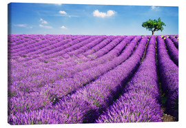 Lærredsbillede  Lavender field and tree - Matteo Colombo