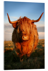 Akrylbillede  Highland Cattle - Martina Cross