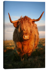 Lærredsbillede  Highland Cattle - Martina Cross