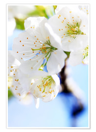 Premium-plakat spring bloom