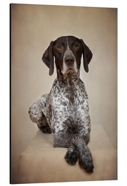 Print på aluminium  German shorthaired pointer / 1 - Heidi Bollich