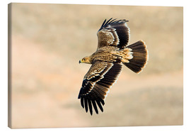 Lærredsbillede  Eastern imperial eagle in flight - M. Schaef