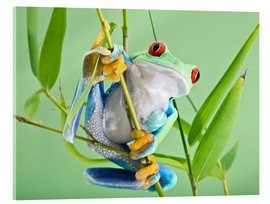 Akrylbillede  Red-eyed tree frog - Linda Wright