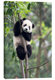 Lærredsbillede  Panda on a tree - Tony Camacho