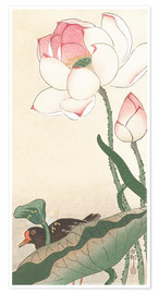 Premium-plakat Gallinule with Lotus Flowers