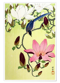 Premium-plakat  Magpie with Pink and White Magnolia Blossoms - Ohara Koson