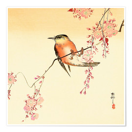 Premium-plakat  Red Bird and Cherry Blossoms - Ohara Koson