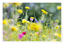 Premium-plakat Summer Meadow with blooming wild Flowers