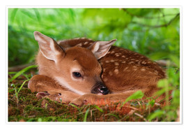 Premium-plakat Fawn in the grass