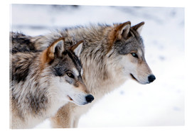 Akrylbillede  Two Wolves in the snow - Louise Murray