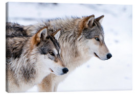 Lærredsbillede  Two Wolves in the snow - Louise Murray