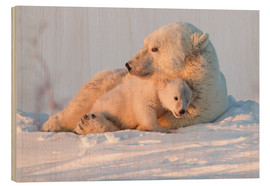 Print på træ  Polar bear (Ursus maritimus) and cub, Wapusk National Park, Churchill, Hudson Bay, Manitoba, Canada, - David Jenkins