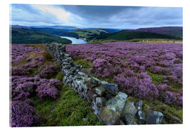 Akrylbillede  Heather covered Bamford Moor and dry stone wall - Eleanor Scriven