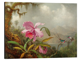 Print på aluminium  Cattleya Orchid and Three Hummingbirds - Martin Johnson Heade