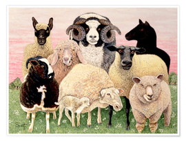 Premium-plakat  several sheeps - Pat Scott