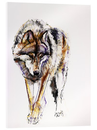 Akrylbillede  European Wolf - Mark Adlington