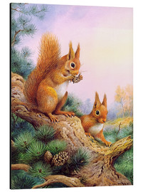 Print på aluminium  Pair of Red Squirrels on a Scottish Pine - Carl Donner