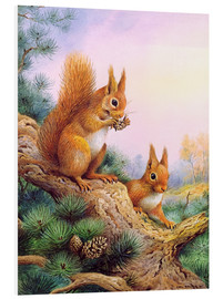 Print på skumplade  Pair of Red Squirrels on a Scottish Pine - Carl Donner