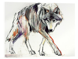 Akrylbillede  Wolf in search - Mark Adlington