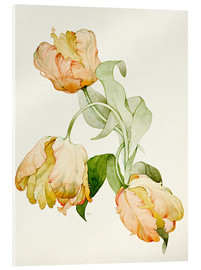 Akrylbillede  Parrot tulips - Sarah Creswell
