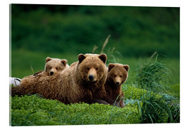 Akrylbillede  Grizzly bear with cubs - Jo Overholt