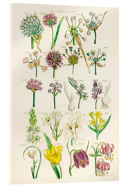 Akrylbillede  Wildflowers - Sowerby Collection