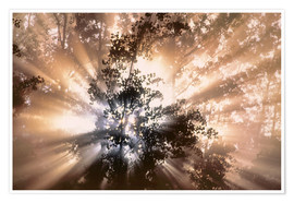 Premium-plakat Fog and sun rays in forest