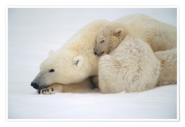 Premium-plakat  Polar bear mother with cub - Kenneth Whitten