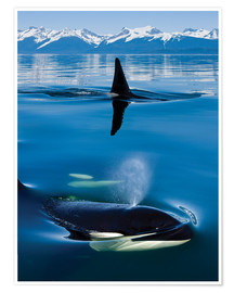 Premium-plakat Whales in front of the Range Mountains