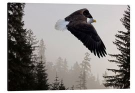 Print på aluminium  Bald Eagle in the Mist - John Hyde