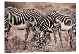 Akrylbillede  Two Zebras Grazing Together - David DuChemin