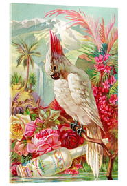 Akrylbillede  Cocktail Cockatoo - Advertising Collection