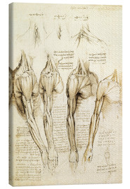 Lærredsbillede  Muscles of shoulder, arm and neck - Leonardo da Vinci