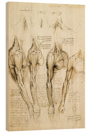 Print på træ  Muscles of shoulder, arm and neck - Leonardo da Vinci