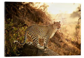 Akrylbillede  female Leopard at sunset - Jürgen Ritterbach
