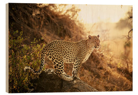 Print på træ  female Leopard at sunset - Jürgen Ritterbach