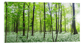 Akrylbillede  A forest in springtime with wild garlic - Benjamin Butschell