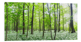 Print på skumplade  A forest in springtime with wild garlic - Benjamin Butschell