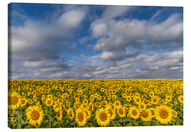 Lærredsbillede  Sea of Sunflowers - Achim Thomae
