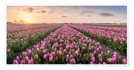 Premium-plakat tulips fields holland