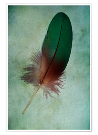 Premium-plakat  Green feather - Jaroslaw Blaminsky