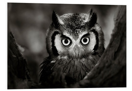 Print på skumplade  White-faced Owl perched in a tree - Johan Swanepoel