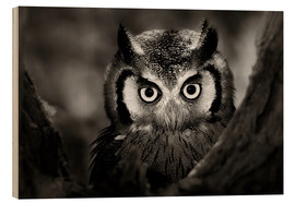 Print på træ  White-faced Owl perched in a tree - Johan Swanepoel