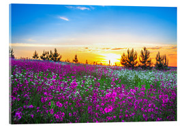Akrylbillede  Sunrise over a blossoming meadow